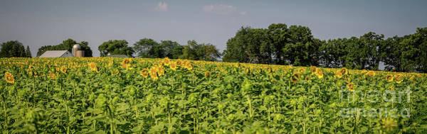 Wall Art - Photograph - Sunflower Collection #5  ... The Barn by Deborah Klubertanz