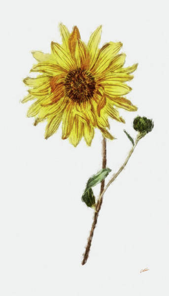 Painting - Sunflower - Dwp1952018 by Dean Wittle