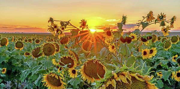Photograph - Sunflower Field At Sunset by Judi Dressler