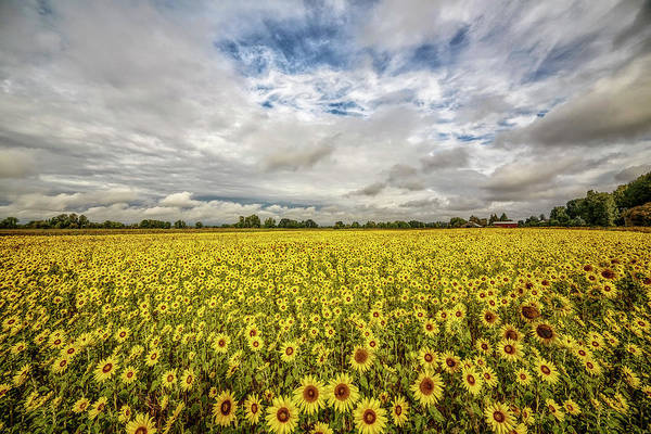 Photograph - Sunflower Fields Forever by Wes and Dotty Weber