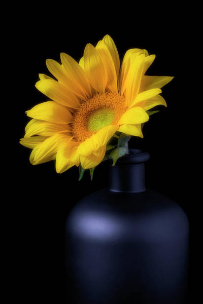 Wall Art - Photograph - Sunflower In Black Vase by Garry Gay