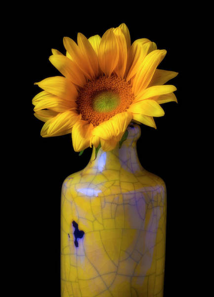 Wall Art - Photograph - Sunflower In Cracked Vase by Garry Gay