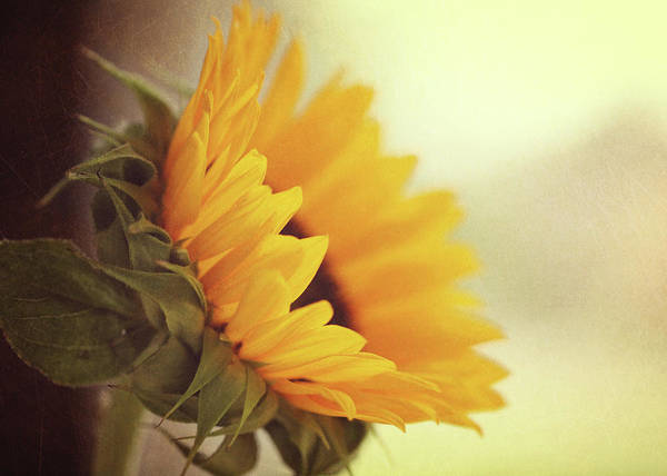 Single Leaf Wall Art - Photograph - Sunflower by Melissa Deakin Photography