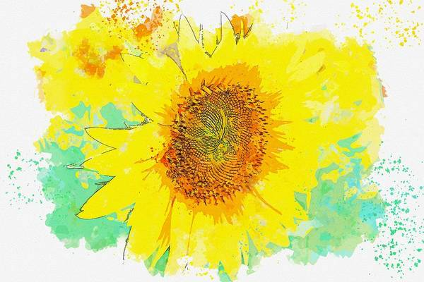 Wall Art - Painting - Sunflower Plant Flower Nature Agriculture Field Watercolor By Ahmet Asar by Ahmet Asar