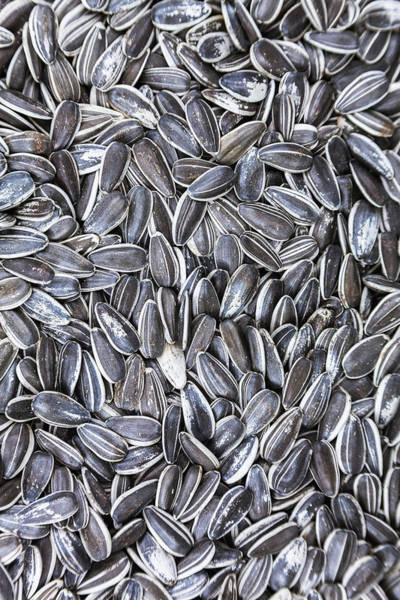 Photograph - Sunflower Seeds by Jeanette Fellows