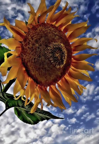 Photograph - Sunflower Sky by Jolanta Anna Karolska