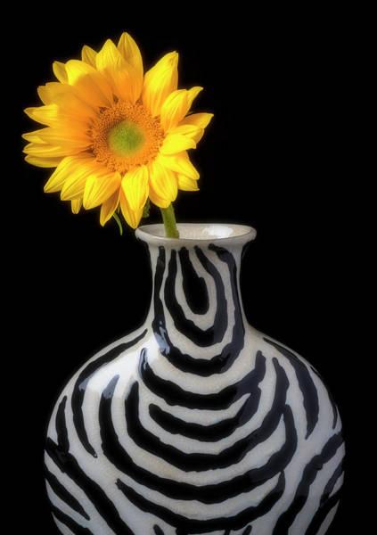 Wall Art - Photograph - Sunflower Still Life  by Garry Gay