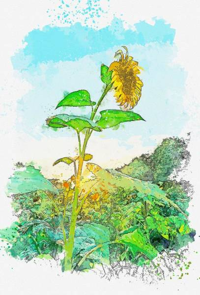 Wall Art - Painting - Sunflower Sunset Watercolor By Ahmet Asar by Ahmet Asar