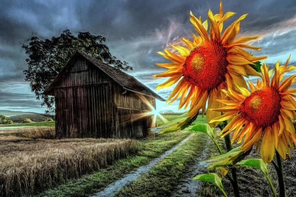 Photograph - Sunflower Watch At Nightfall by Debra and Dave Vanderlaan