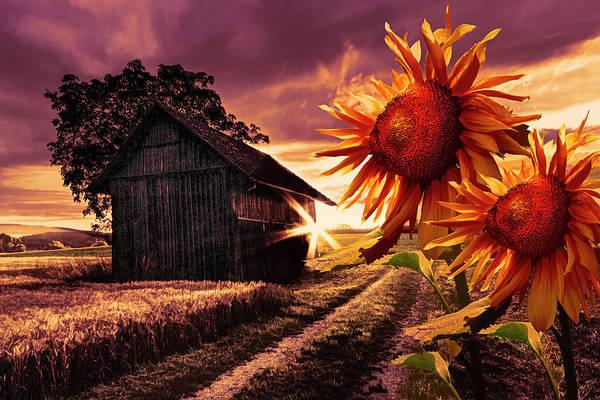 Photograph - Sunflower Watch Golden Evening by Debra and Dave Vanderlaan