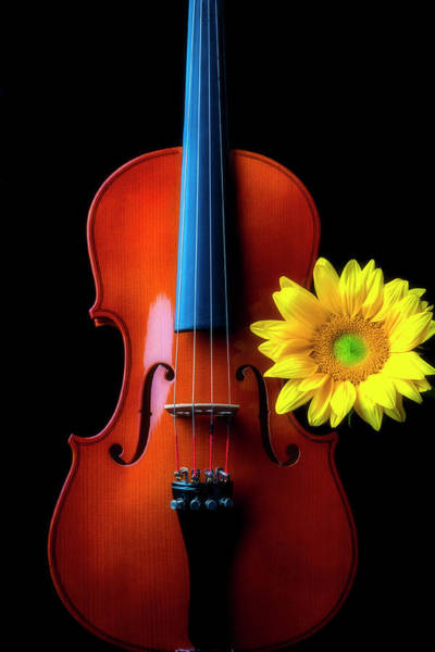 Photograph - Sunflower With Beautiful Violin by Garry Gay
