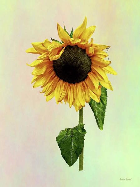 Photograph - Sunflower With Peakaboo Bangs by Susan Savad