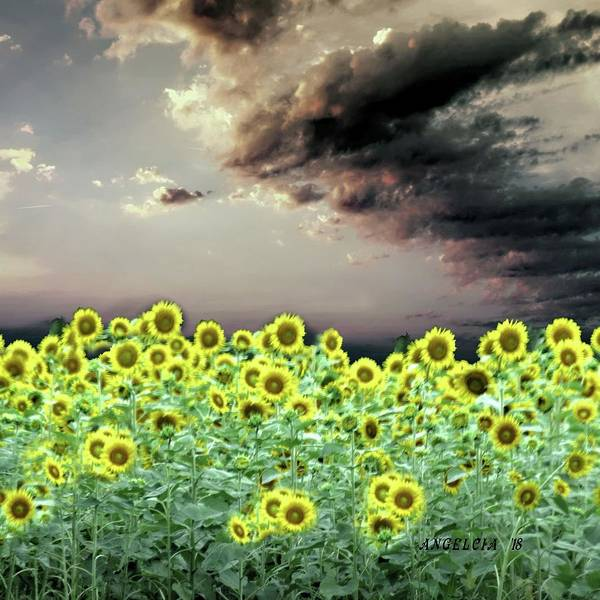Photograph - Sunflowers Fields Of Windsor Castle by Angelcia Wright