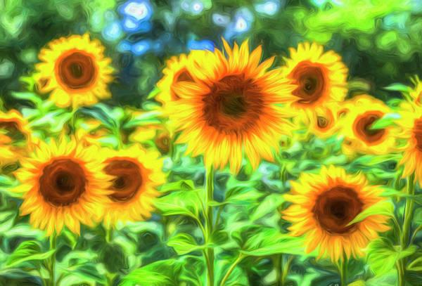 Wall Art - Photograph - Sunflowers  Memories by David Pyatt