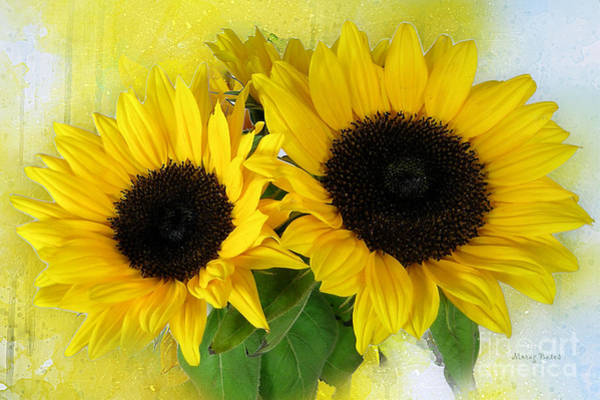 Mixed Media - Sunflowers by Morag Bates