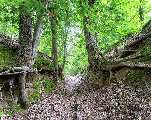 Photograph - Sunken Trace by Susan Rissi Tregoning