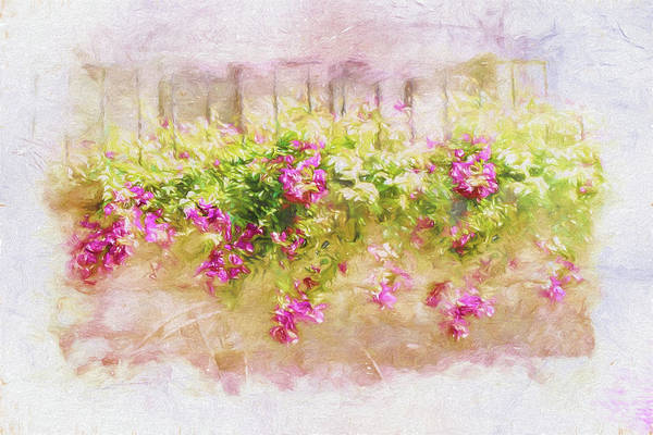 Photograph - Sunkissed Flowers by Marilyn Wilson