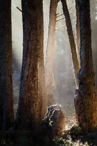 Photograph - Sunlight by Alexander Fedin