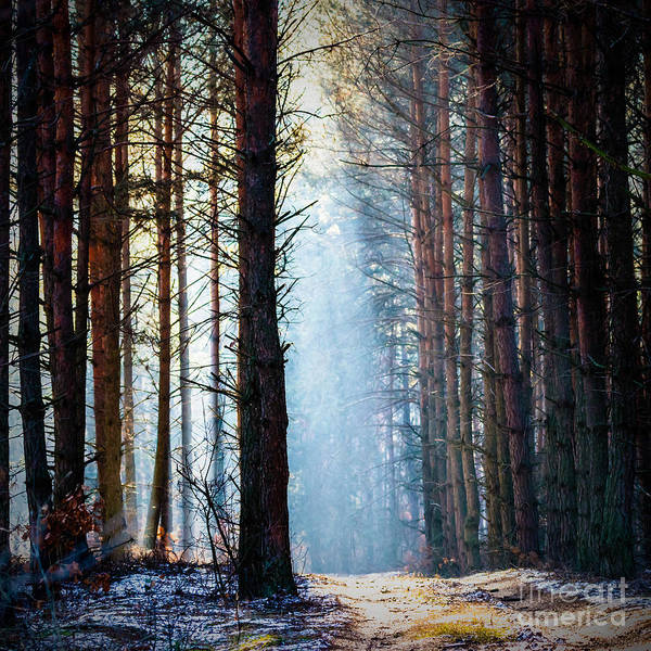 Wall Art - Photograph - Sunlight In The Grey Forest, Nature by Tspider