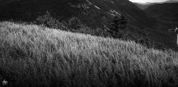 Photograph - Sunlight On Ferns, Mount Willard by Wayne King