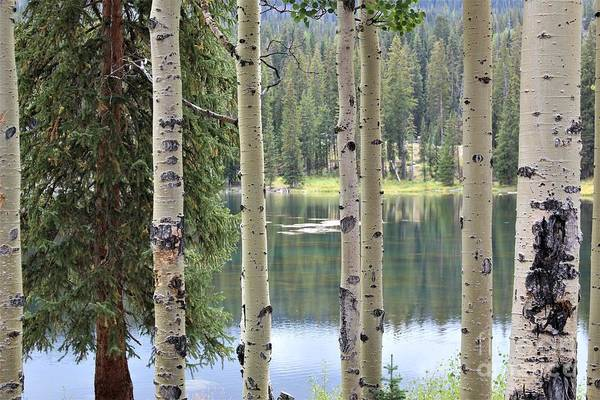 Photograph - Sunlight On The Lake by Tammie J Jordan