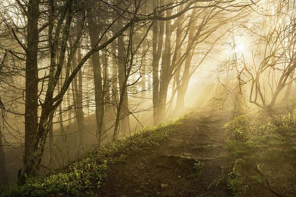 Wall Art - Photograph - Sunlight Streaming Through Fog by Adam Jones