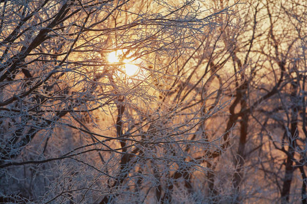 Wall Art - Photograph - Sunlight Through Branches In Winter by Mint Images