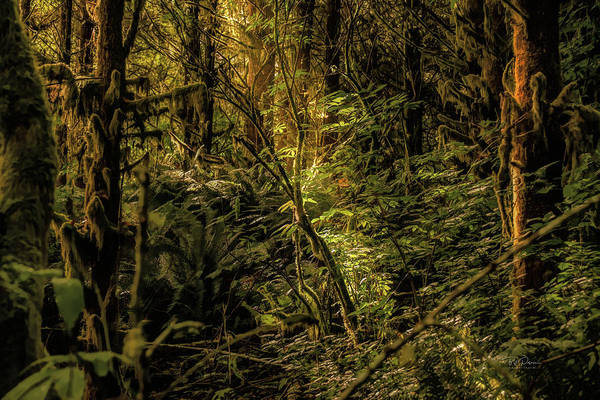 Photograph - Sunlit Leaves by Bill Posner