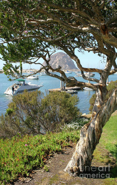 Photograph - Sunny Day At Morro Bay by Michael Rock