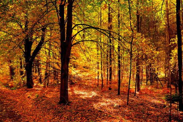 Gorecki Photograph - Sunny Day In The Autumn Forest by Henryk Gorecki