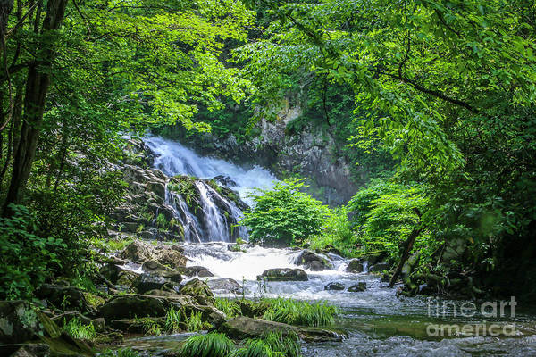 Photograph - Sunny Day Waterfall by Tom Claud