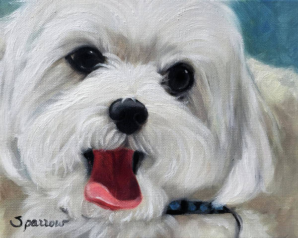 Maltipoo Wall Art - Painting - Sunny Disposition by Mary Sparrow