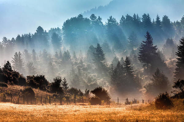 Photograph - Sunny Morning by Evgeni Dinev