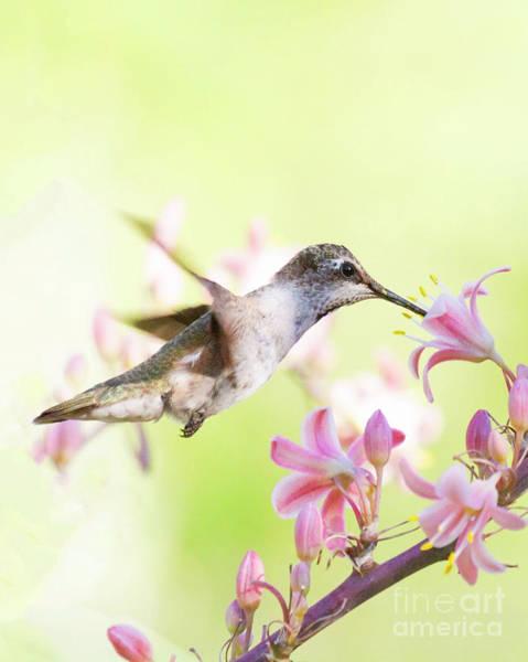 Wall Art - Photograph - Sunny Morning Hummingbird by Ruth Jolly