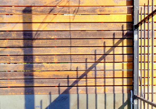 Photograph - Sunny Morning Shadows by VIVA Anderson