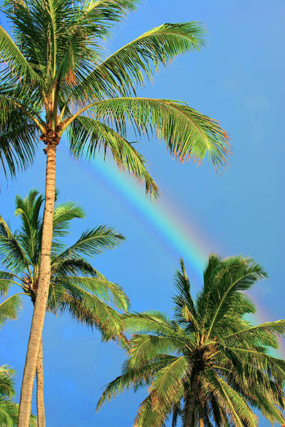 Wall Art - Photograph - Sunny Rainbow by Sean Davey