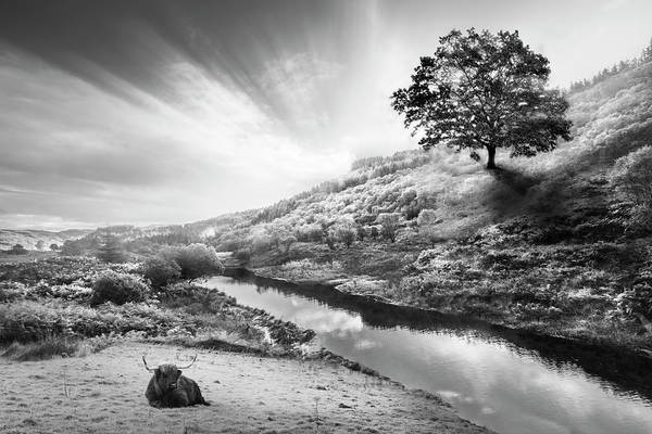 Photograph - Sunrays Over The Farm In Black And White by Debra and Dave Vanderlaan