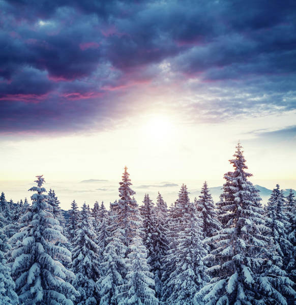 Pine Tree Photograph - Sunrise Above The Winter Forest by Borchee