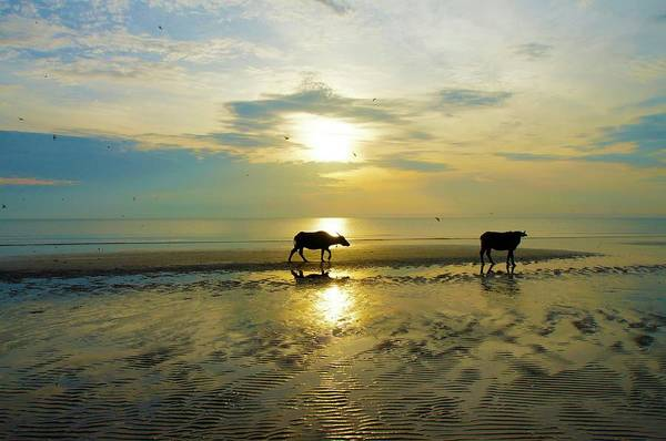 Sea Cow Photograph - Sunrise At Pantai Sepat by Ra'uf Hussin