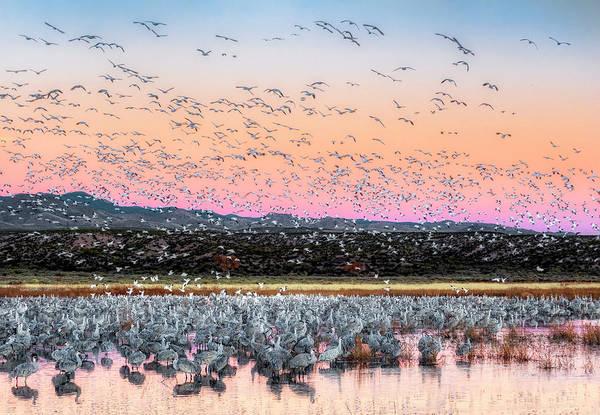 Photograph - Sunrise At The Crane Pool by Scott Bourne