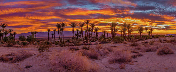 Photograph - Sunrise - Borrego Springs by Peter Tellone