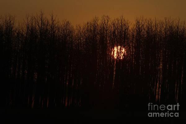 Photograph - Sunrise Glow by Ann E Robson