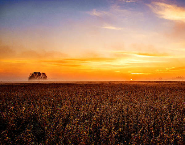 Photograph - Sunrise In The Bean Field by John Harding
