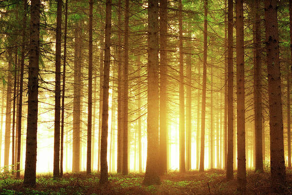 Back In The Day Photograph - Sunrise In The Forest by Borchee