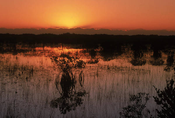 Wall Art - Photograph - Sunrise In The Mangroves by Michael Lustbader