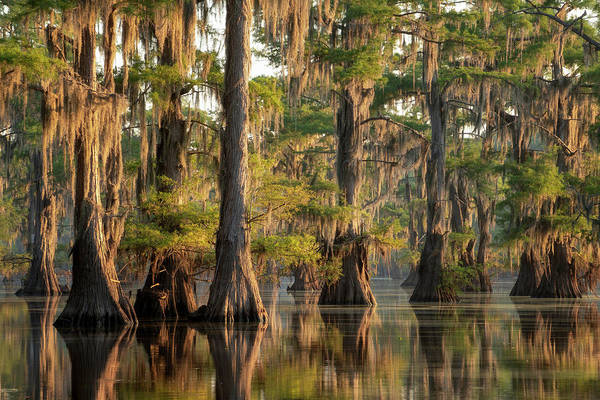 Bald Cypress Wall Art - Photograph - Sunrise In The Swamps Of Caddo Lake, Texas by Martin Podt