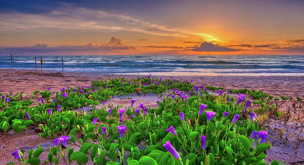 Photograph - Sunrise Morning Glory by Dillon Kalkhurst