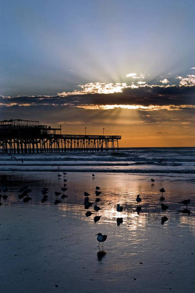 Wall Art - Photograph - Sunrise On Galveston Beach by Dhuss