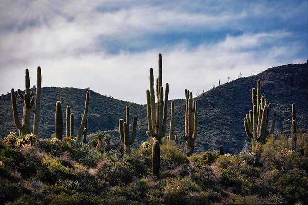 Wall Art - Photograph - Sunrise On Saguaro Hill  by Saija Lehtonen