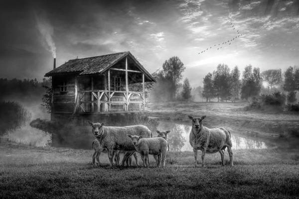 Wall Art - Photograph - Sunrise On The Farm In Black And White by Debra and Dave Vanderlaan
